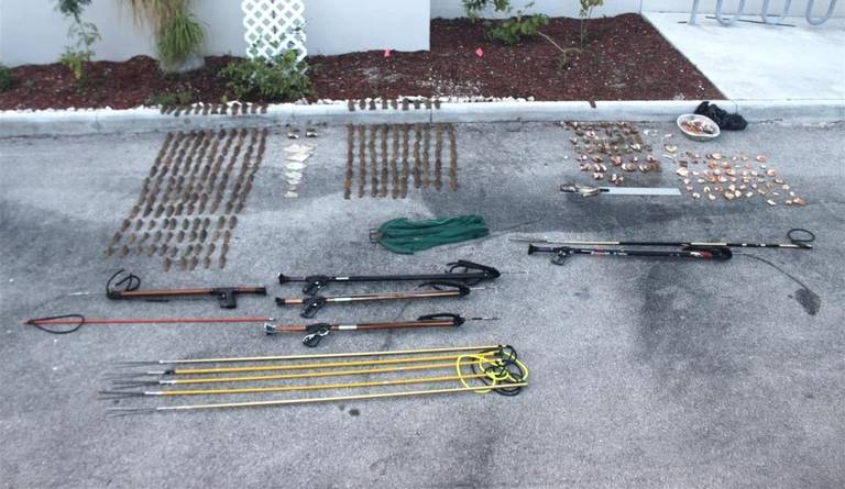 This is the marine life and spearfishing gear seized.